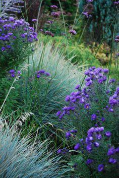 Stacie Crooks Garden Design