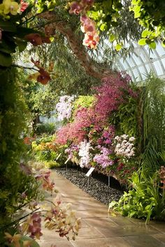 Orchid garden at the New York Botanical Gardens. I had to google the image. We should go see that ;)      - JJ