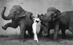 Irving Penn fue de los pioneros en la fotografía de moda, aquí se encargó de enmarcar a su esposa Lisa Fonssagrives (quien era modelo) con un vestido Dior a lado de unos elefantes.