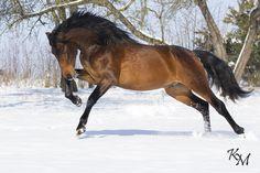 Horse /  (sonnen-reiter)
