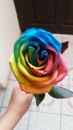 Rosa arco iris
