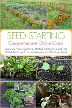 Save hundreds of dollars when you learn how to grow your garden from seed! This easy, online Seed Starting Course was designed specifically for beginners! In this comprehensive online course, you will learn a proven system for growing garden seeds! Don't worry, you won't need to purchase any expensive equipment for this course. And you get lifetime access so you can go through all the modules as many times as you need to, at your own pace.