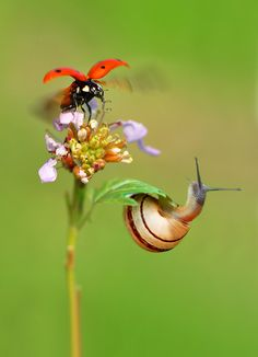 Snail and Ladybug by Mustafa Öztürk Cool Insects, Bugs And Insects, A Bug's Life, Mundo Animal, Belleza Natural, Science And Nature, Macro Photography, Amazing Nature, Pet Birds
