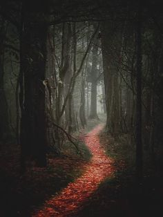 photographer,darkness-By Maspi (Matt Spitz)photography photographer darkness dark forest darkforest magicforest magic fairytale occult oc Forest Path, Magic Forest, Dark Forest, Tree Forest, Dark Photography, Winter Photography, Beautiful World, Beautiful Places, Fantasy Forest