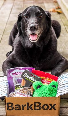 BarkBox delivers a monthly themed box of carefully selected doggy toys and treats, and (more importantly) a pawsome experience for you to share with your furry friend. All treats are full-size, all-natural, and made in USA/Canada. Plans can be customized for big or small dogs, heavy chewers, and pups with allergies. Most of all, it just makes dogs happy. That's a great reason to get a BarkBox!