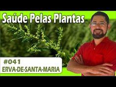 Saúde Pelas Plantas - Erva de Santa Maria [vermífuga, cicatrizante, analgésica, repelente] - YouTube