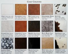 Horse color chart