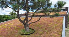 Système pour toiture végétalisée pour toit-terrasse - SEDUM CARPET - ZinCo GmbH Amazing Greens, Outdoor Furniture, Outdoor Decor, Park, Plants, Home Decor, Green, Life Hacks, Patio