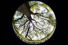 Oak Tree photo taken with a fisheye lens by Robert Beck of Sports Illustrated