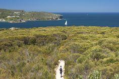 Manly to Spit Bridge walk, Sydney Harbour National Park. Image: Hamilton Lund; Destination NSW