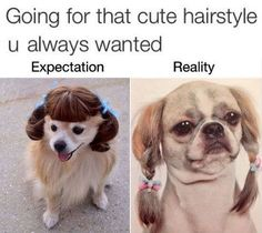 expectation reality hair