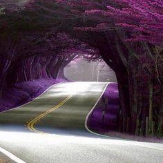 Purple Tunnel