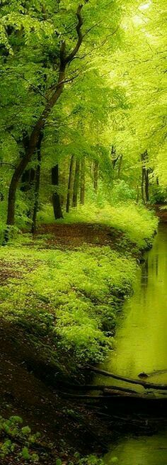 Lush green trees on a riverbank