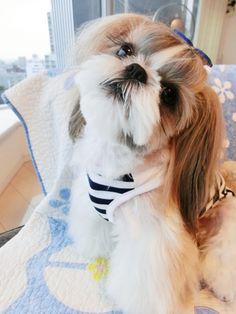 愛犬投稿 投稿者:レオママさん