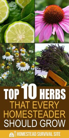 Top 10 Herbs That Every Homesteader Should Grow You probably already know that many herbs have abundant medicinal properties. Since most herbs are easy and inexpensive to grow in your garden, on your patio, or on your windowsill, let's dig deeper into how Organic Gardening, Gardening Tips, Indoor Gardening, Balcony Gardening, Flower Gardening, Gardening Supplies, Types Of Herbs, Garden Seeds, Herbs Garden