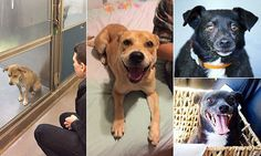 Heart-warming photos of rescue dogs before and after adoption