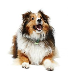 I miss my Bailey dog :(