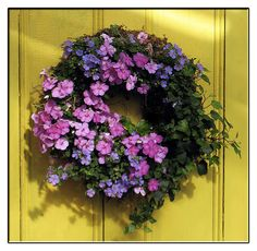 """Think of a wreath as a """"container."""" You should have a thriller, filler and spiller.   Get the wreath base here - http://www.mosserlee.com/product/529_LivingWreath.aspx"""