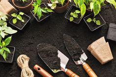Unohda kemikaalit: näin pääset eroon rikkaruohoista – tarvitset vain kahta ainetta