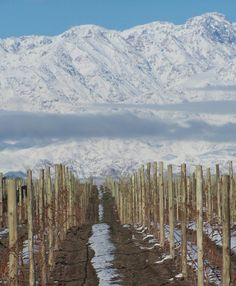 The first snowflakes of the year today in Tupungato! Domaine Jean Bousquet Winery, Argentina