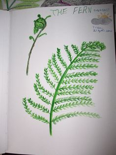 Fern Nature Journal by HarmonyArtMom, via Flickr