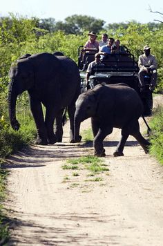 Efefants and tourists in Jeep, South Africa | Discover why Millions of Tourists visit South Africa