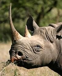 Support Sir Richard Branson's call on CITES to meet NOW and stop Rhino Poaching