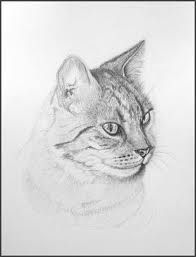 Anamorphic, Art N Craft, Cat 2, Animal Drawings, Drawing Animals, Art Sketches, Painting, Om, Google