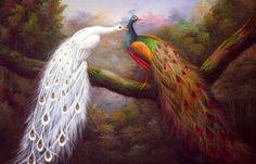 pavão vermelho - Pesquisa Google