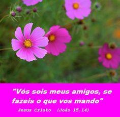 Momento Versículos : Amigos de Jesus Cristo  -  João 15.14