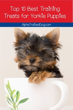 Keeping training treats for Yorkie puppies on hand will make all of your training tasks infinitely easier. Check our our favorites! Puppy Training Schedule, Dog Training Treats, Dog Training Classes, Best Dog Training, Free Puppies, Yorkie Puppies, Small Puppies, Yorkies, Puppy Biting