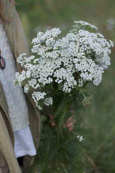 Dandelion, Herbs, Garden, Nature, Flowers, Plants, Food, Naturaleza, Dandelions