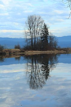 One of my favourite photos taken in Maple Ridge, BC. Prints and merchandise available by clicking the photo. :)