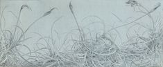 The Silverpoint Exhibition, National Arts Club, New York . Petunias, Fierce, Silverpoint, National Art, Art Club, Art Forms, Spring, Monochrome, Flora