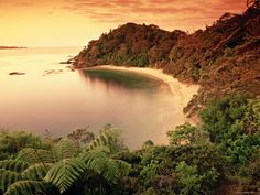 Whale Bay NZ......