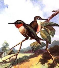 Bird Animal Totems | Animal Spirit Guides | Meanings |http://psychiclibrary.com/beyondBooks/bird-animal-totems go to bird, hummingbird
