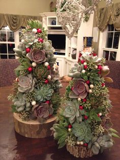 Long lasting succulent trees. Perfect for Christmas!
