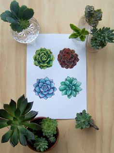 drawing succulents