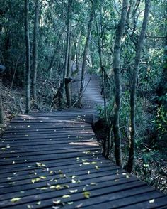 Forest walks - Knysna Knysna, Back In Time, Cape Town, Garden Bridge, Beautiful Gardens, Places Ive Been, South Africa, Outdoor Structures, Outdoor Decor