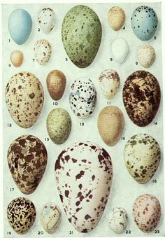 Inspiration for egg shadow box