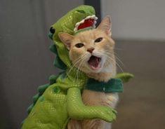 Catasaurus