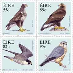 Birds of Prey on Irish Stamps   On 29 July, 2010, An Post issued four stamps…