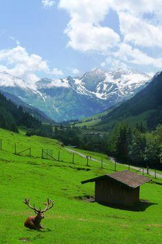 Grossglockner Wildlife Park, Austria