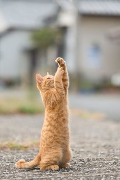 Cat by Ryuichi Miyazaki on 500px