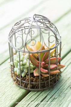 This little succulent filled bird cage is so cute!