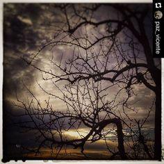 #Repost @paz_vicente  [...Las largas horas nocturnascon sus infinitos pensamientos...hasta que al fin llegó la mañanadespués otro día y una nueva noche sin fin...] #night #goodnight #goodtimes #photooftheday #nofilter #instagoodnight #instagood #goodday #madrid #spain #igersoftheday #sinfiltro #nature
