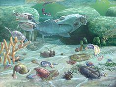 cambrian era - Google Search