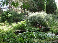 Findhorn water garden