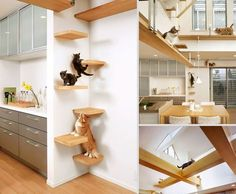 furniture design for pet lovers