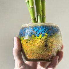 10 bellas imágenes de arreglos de bambú de la buena suerte   LoveToKnow Feng Shui, Bamboo, Gardens, Colorful, Lucky Bamboo, Bamboo Plants, Bamboo Canes, Meaning Of Colors, Plant Stem